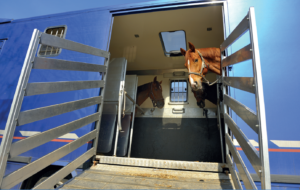 Gills Driving School Equine Transport Certificate